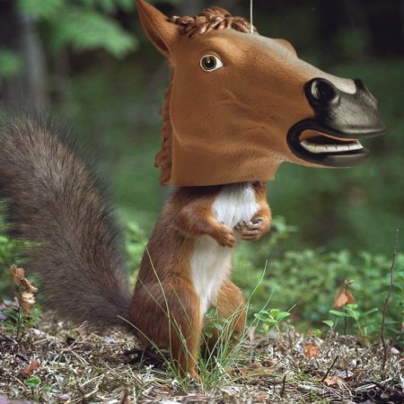 funny horse head squirrel feeder that makes the squirrel look like he has a horse's head when he's eating out of it