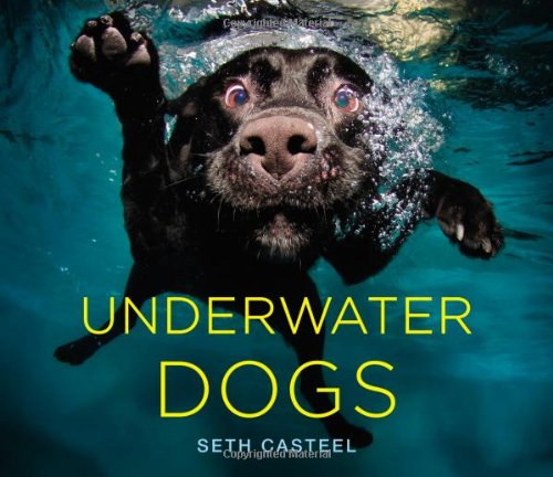 photography book with pictures of dogs underwater