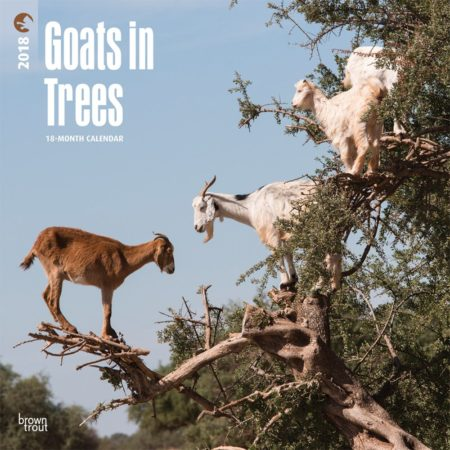 Funny calendar with pictures of goats in trees