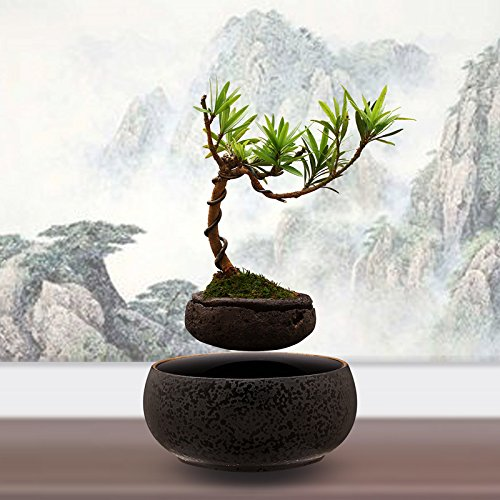 Levitating Bonsai Didn T Know I Wanted That