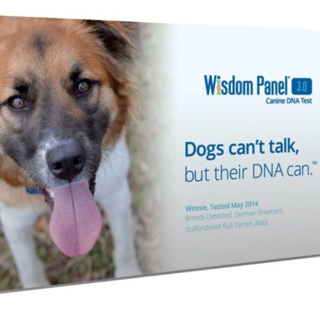 DNA testing kit that tests for your dog's DNA and breed type